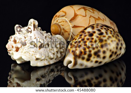 Bowls of a marine cockleshells  on black mirror background.