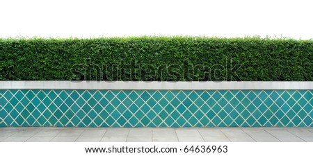 Box hedge with green leafs isolated - stock photo