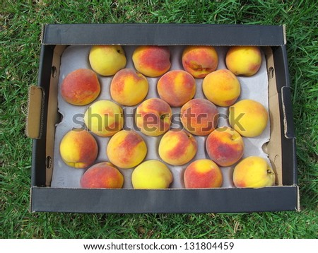 box of peaches on grass - stock photo
