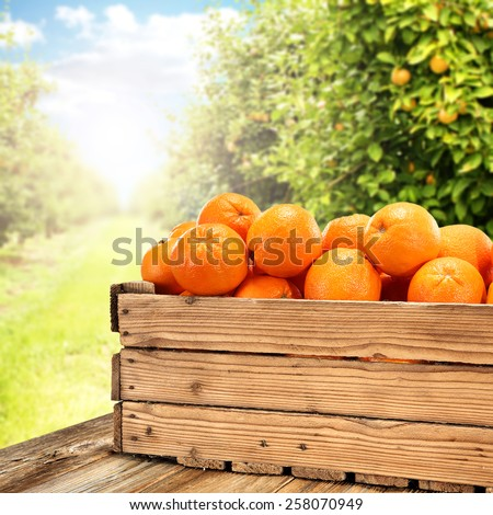 box of wood and table of wood and garden of fruits  - stock photo