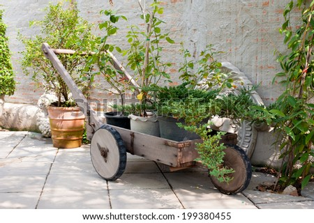 box plant in trolly - stock photo