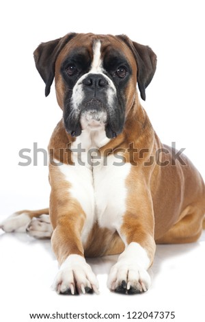 Large dog stock photos illustrations and vector art