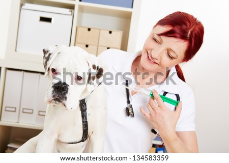 Boxer dog getting immunization from veterinarian with a syringe - stock photo
