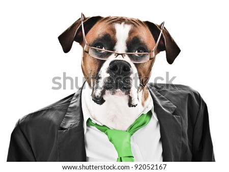Boxer Dog ready for business wearing a suit, green tie and glasses