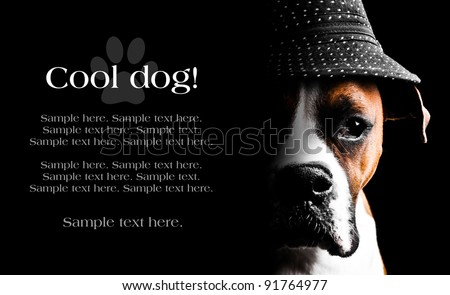 Boxer Dog Wearing a hat with text space to the left - stock photo