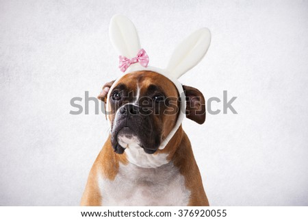 Boxer with bunny ears - stock photo