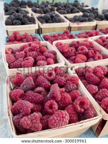Boxes of just picked raspberries and black berries at local farm market. - stock photo