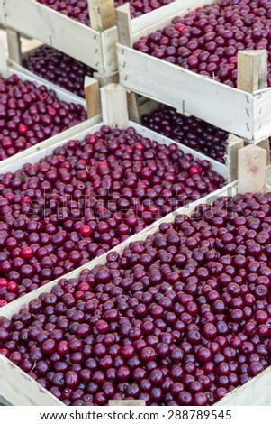 Boxes of sour cherry in farmer market. Selective focus and shallow dof. - stock photo