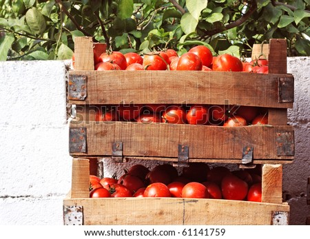Boxes of tomatoes at outdoor street market