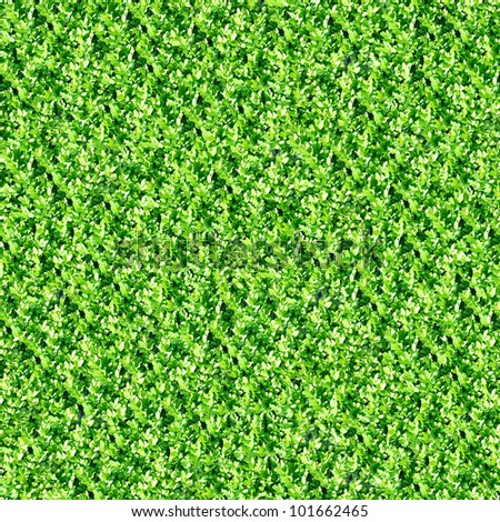 Boxwood hedge seamless background (Buxus sempervirens) - stock photo