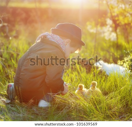 boy and birds - stock photo