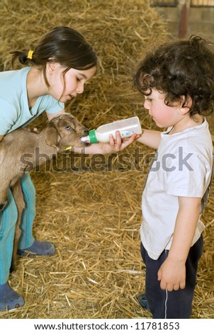 boy and girl feeding bay goat with baby bottle in a farm - stock photo