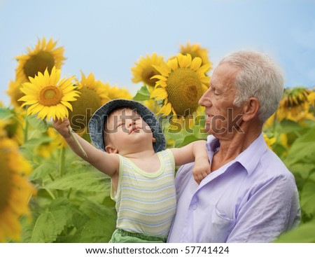 boy and grandfather in sunflower field - stock photo