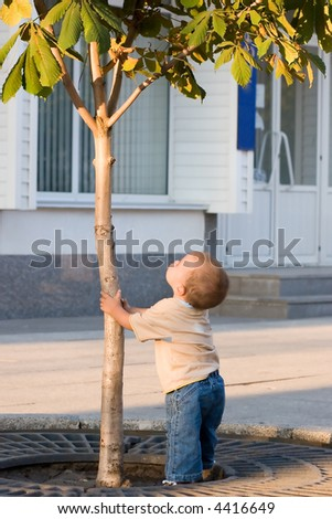 Boy and tree - stock photo