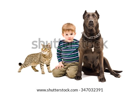 Boy, dog and cat together isolated on a white background - stock photo