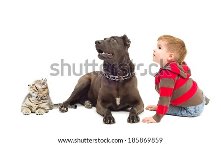 Boy, dog and kitten together looking up isolated on white background - stock photo