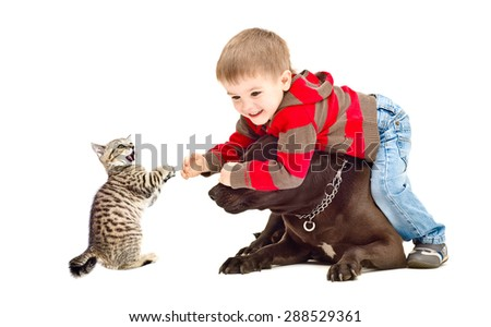 Boy, dog Staffordshire terrier and kitten Scottish Straight cheerfully playing together isolated on white background - stock photo