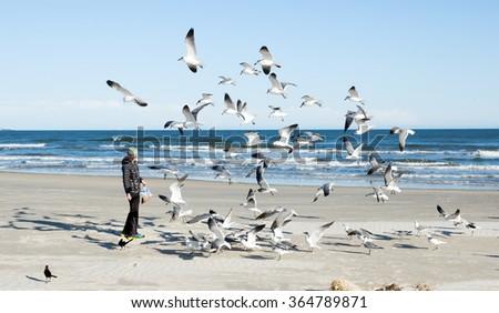 Boy feeding gulls on the beach. Gulf of Mexico, Texas, USA - stock photo