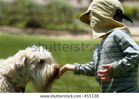 Boy feeding his dog - stock photo