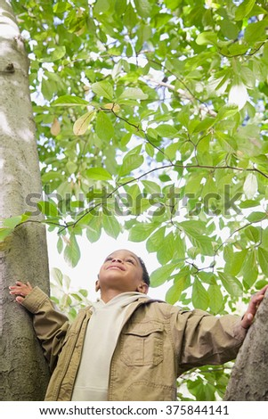 Boy in a tree - stock photo