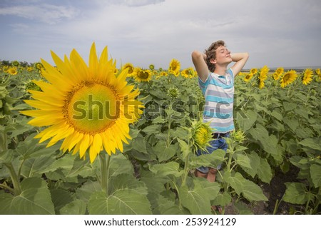 Boy in beauty field with sunflowers - stock photo