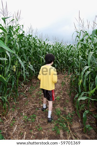 Boy inside corn maze amid tall corn, walking away from you - stock photo