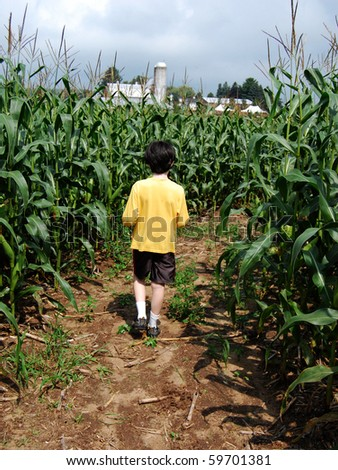 Boy inside corn maze, walking away from you - stock photo