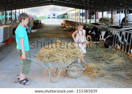 Boy keeps trolley with hay and girl loads hay by pitchfork at cow farm. - stock photo