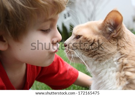 Boy kissing his cat (shallow depth of field, focus on nose) - stock photo