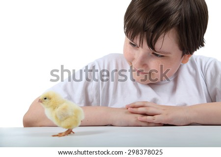 Boy looks at a chicken on a white background - stock photo