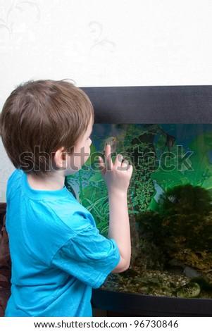 Boy looks at aquarian small fishes at home - stock photo