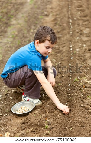 Boy planting garlic on a lawn in rows - stock photo