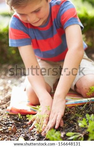 Boy Planting Seedlings In Ground On Allotment - stock photo