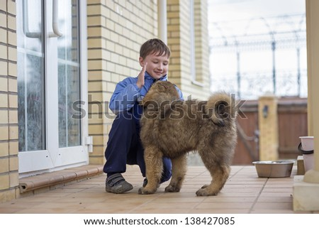 Boy playing with a puppy Tibetan Mastiff - stock photo