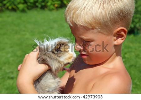 boy plays with Guinea pig on meadow - stock photo