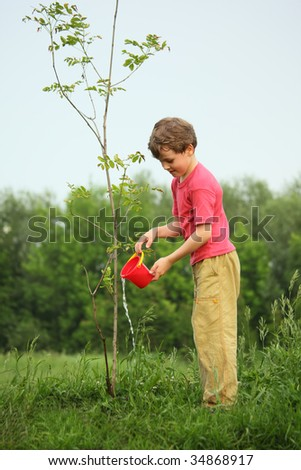 boy  pours on seedling of  tree - stock photo