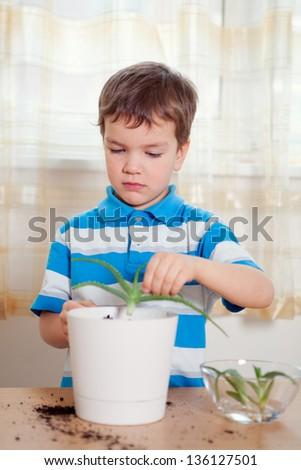 boy puts plant in pot, indoor - stock photo