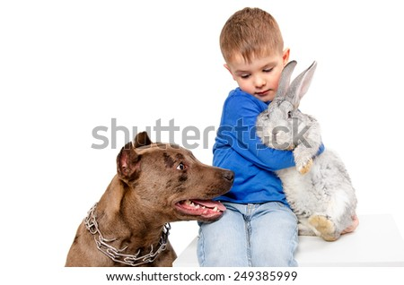Boy sitting together with gray rabbit and dog breed pit bull - stock photo