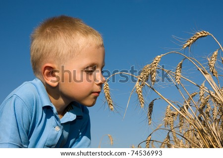 Boy smelling wheat ears in summer day on farm - stock photo