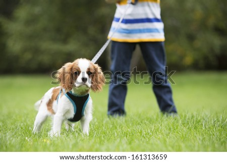 Boy Taking Puppy For Walk On Lead - stock photo