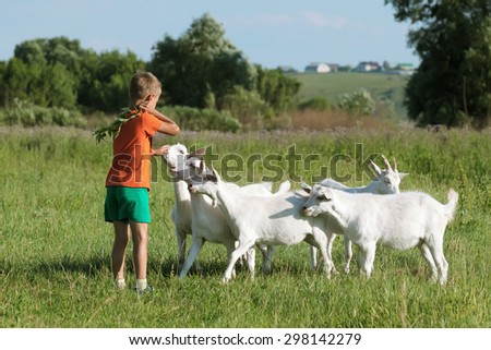 Boy to train young kids on  green meadow. - stock photo
