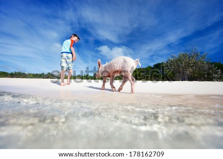 Boy with swimming pig of Exuma beach, Bahamas - stock photo