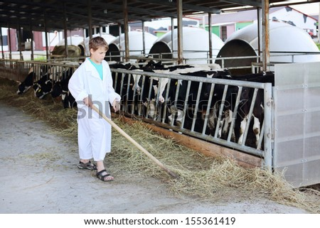 Boy work by hayfork near eating small calves at large cow farm.  - stock photo