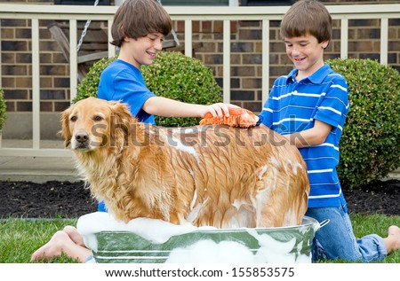 Boys Giving Dog a Bath - stock photo