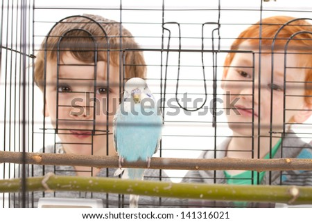 Boys looking at pet budgerigar in cage. Isolated on white.