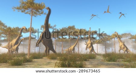 Brachiosaurus Browsing - A herbivorous sauropod dinosaur that lived in the Jurassic Age. A Brachiosaurus herd browse on tree tops as a flock of Pterodactylus flying reptiles fly overhead. - stock photo