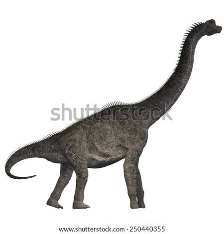 Brachiosaurus on White - Brachiosaurus was a herbivorous dinosaur that lived in the Jurassic Era of North America. - stock photo