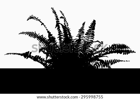 Bracken - fern - black silhouette - illustration