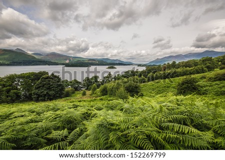 Bracken in the Lake District - stock photo
