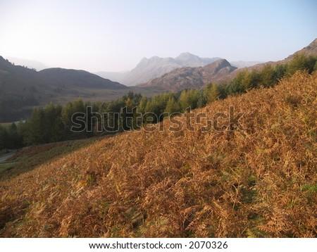 Bracken mountains - stock photo